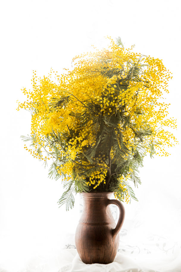 mimosa bouquet: Traditional flowers for 8th March